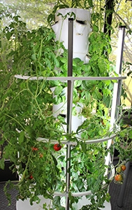 The tower garden at Lynch headquarters. The company is mulling plans to build up to five more. PHOTO: Ivana Skobo/Lynch