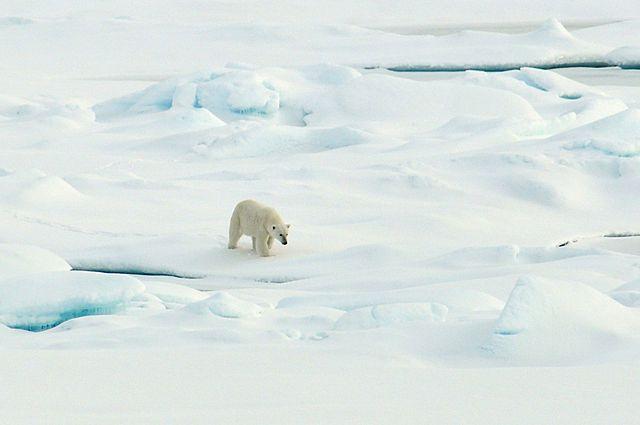 PHOTO: NOAA Photo Library, via flickr
