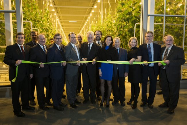 Sprawling $38M cucumber greenhouse opens in Saint-Felicien, Que. - CanadianManufacturing.com