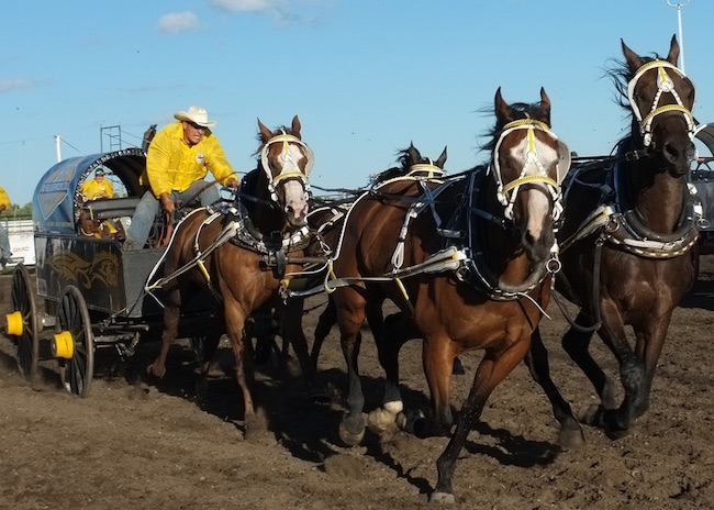 Is The Oilsands Back Bids Rise At Stampede Chuckwagon
