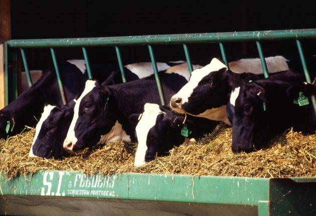 Grant to help Vermont surplus milk products get to foodbank